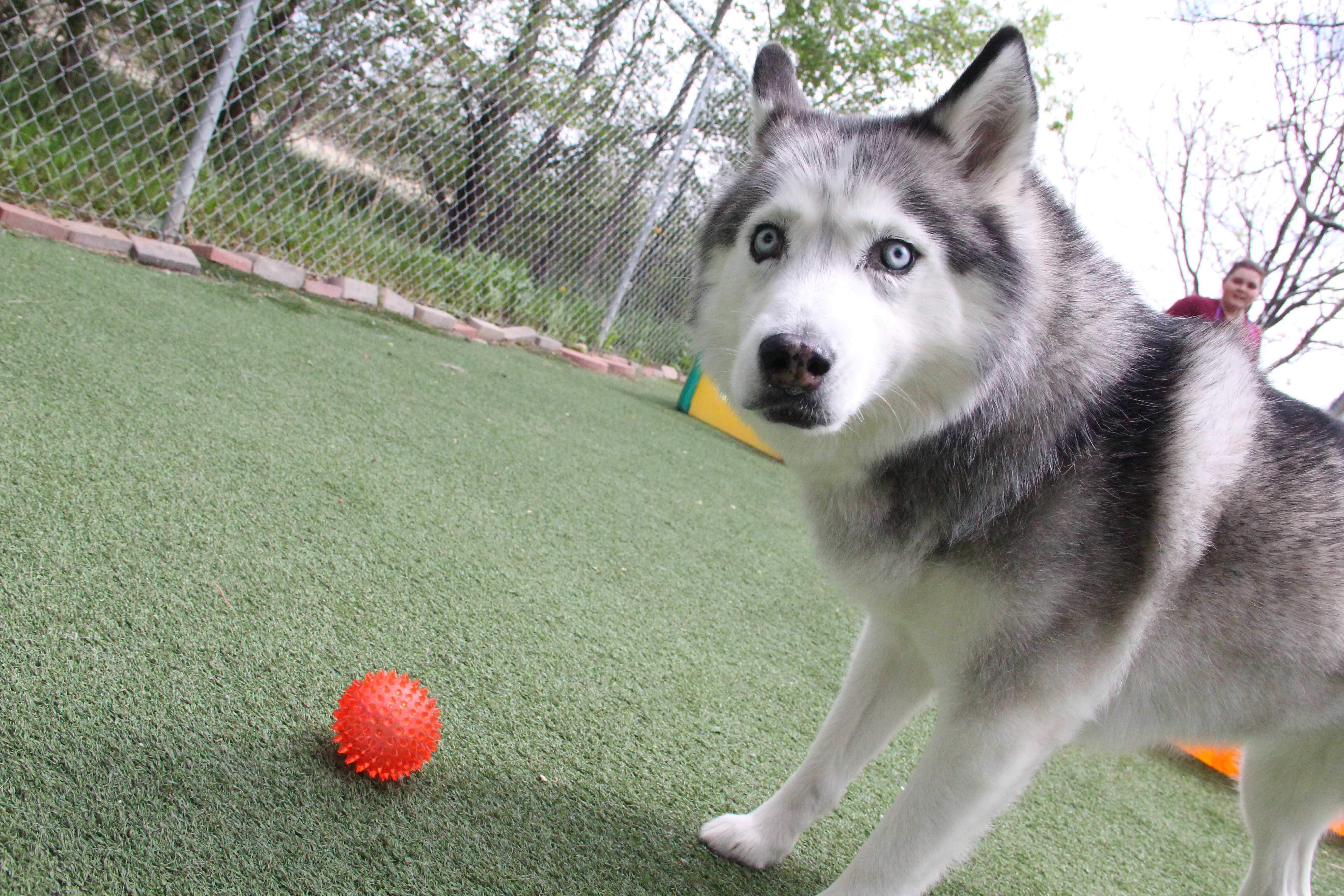 Ball?